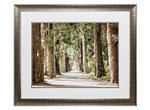 Cypress Path Wall Art